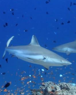 Underwater Hilton Maldives